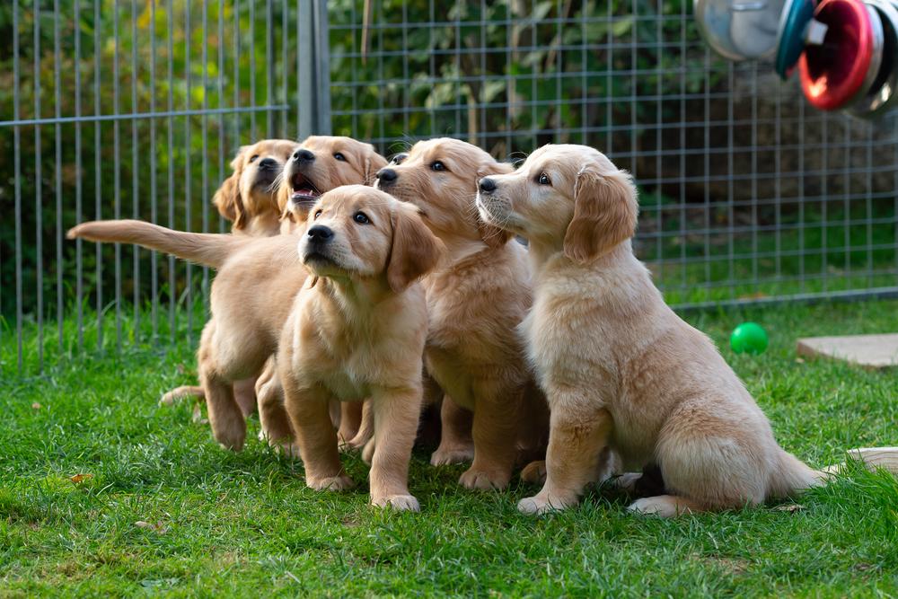 تتعاون واحة الحيوان مع حملات العناية بالحيوانات الأليفة وتعزز مفاهيمها والأنشطة المرتبطة بها.