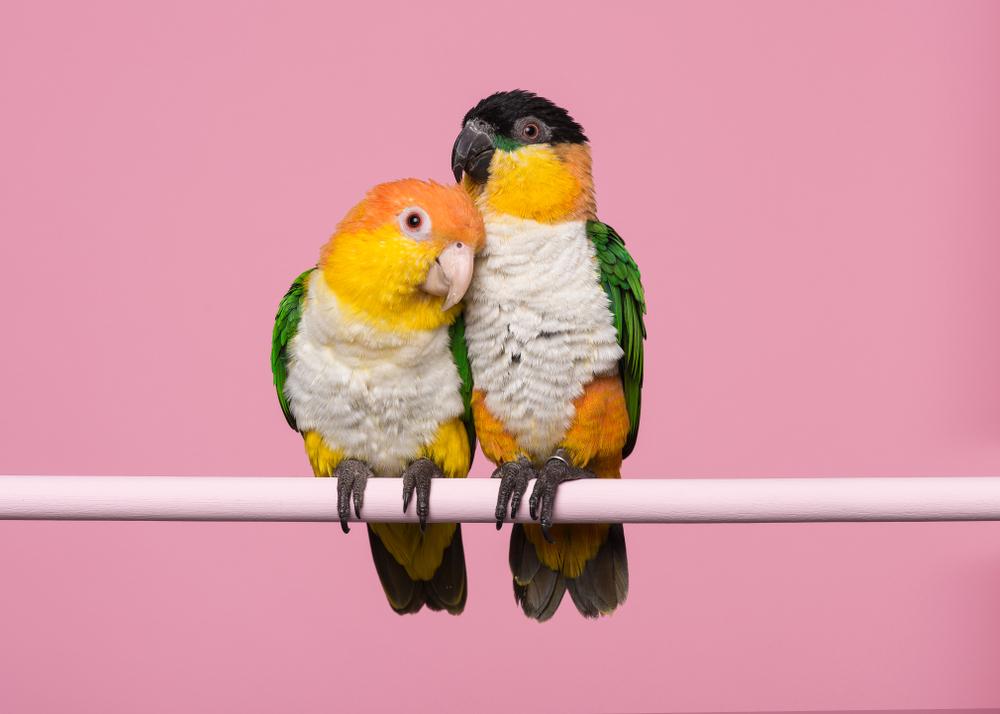 https://petoasisksa.com/company/wp-content/uploads/2021/05/Bird.jpg