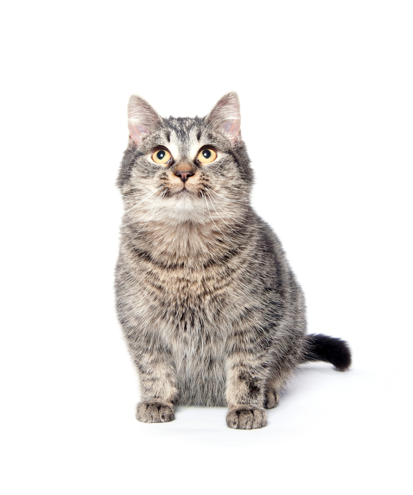 https://petoasisksa.com/company/wp-content/uploads/2021/05/Cat.jpg