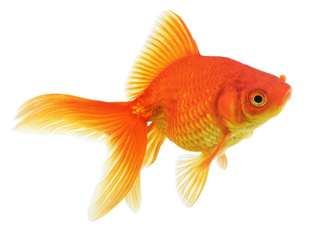 https://petoasisksa.com/company/wp-content/uploads/2021/05/Fish.jpg