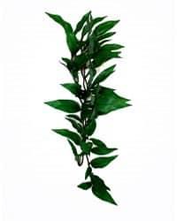 هابي بيت نباتات بلاستيكية لزينة الاحواض